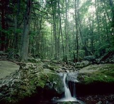 White Oak Canyon, Virginia at Shenandoah National Park 4.8 mile trail.