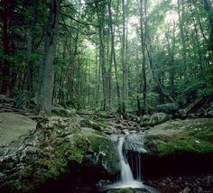 White Oak Canyon, Virginia at Shenandoah National Park 4.8 mile trail.