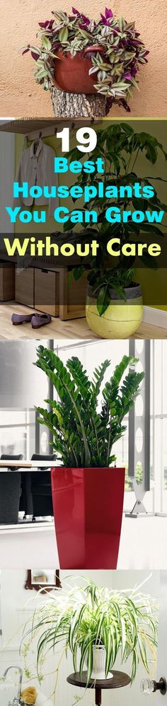 These 19 Easiest Houseplants are perfect for lazy, busy and newbies, who want to plant easy indoor plants that grow with minimal care.