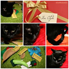 This is our last Mondays with Merlin in 2016. Can you believe it? We have cute kitty pics for Boxing Day and post holiday shenanigans with black cat Clyde+