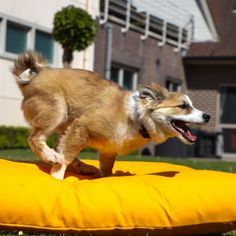 Leaving Work, Dog Cushions, Summer Vibes, Corgi, Quote, Animals, Outdoor, Collection, Quotation