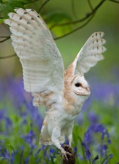 Owl with wings up and out