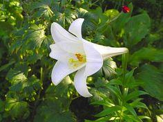 b654a04f77f177f8f57f218191314f25 day lilies lilies flowers