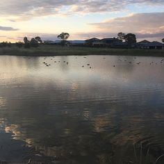 My evening walk. Autumn is definitely here  #lovewhereilive #australia #authorsofinstagram #nofilter