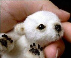 Süßer baby Eisbär