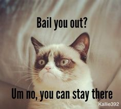 How to scare a teen into behaving: threaten to leave them in jail if they screw up! #grumpycat #grumpycatwisdom