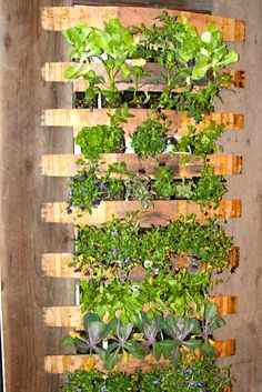 Make A Vertical Garden From Pvc Tubes Pvc Tube Gardens And Craft