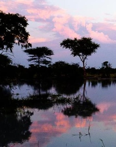 Travel guide to the unspoiled land of heavenly beauty via @Susan Portnoy { #travel #lexploration #inspiration #Africa #Botswana }