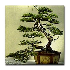 Sold! :) Cypress Tile Coasters http://www.cafepress.com/+cypress_tile_coaster,380134536?aid=419378