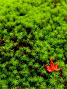 Moss garden at Hounen-in, Kyoto, Japan