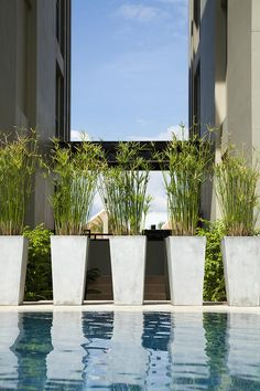 Google Image Result for http://images.fineartamerica.com/images-medium-large/potted-plants-by-swimming-pool-don-mason.jpg