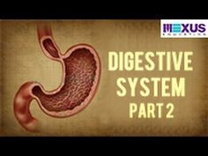 Digestive System - Part 2 - YouTube