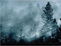 Nature Art in Grey Blue and Black  Fine Art by DElisePhotography