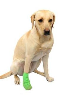 epilepsy, cancer and arthritis in dogs