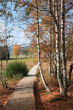 Chalupska slat peat-bog, Sumava Mountains, Czech Republic Prague, Republic Pictures, Travel Agency, Czech Republic, Murals, Fine Art Prints, Country Roads, Mountains, Nature