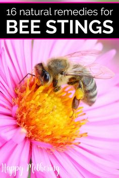 Did one of your kids get stung by a bee and you need to know how to ease swelling and pain? Check out these 16 natural bee sting remedies to feel soon. Wasp Sting Swelling, Wasp Stings, Essential Oil For Swelling, Diluting Essential Oils, Honey Bee Sting, Remedies For Bee Stings, Bee Stings Relief, Drawing Salve