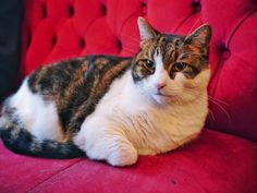 London's East End Food Tour - Meeting Lenny the famous pub cat
