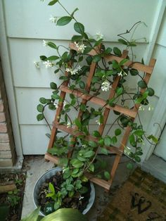 A home made lattice for the jasmine plant. Drilled holes in the pot, then zip-tyed the lattice to the pot.