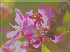 """'Wandkachel """"Blüte (1)""""' von Rudolf Büttner bei artflakes.com als Poster oder Kunstdruck $18.71"""