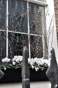 London windowbox - love the use of pussy willow!