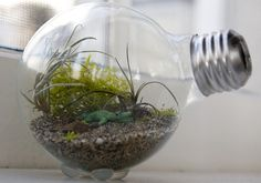 Already have the lightbulb cleaned out, now, it's just finding mini plants