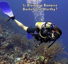Scuba Diving in Bonaire: Should it be on your bucket list?