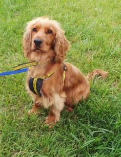 Rudi at Dogs Trust