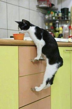 15 funny cats for you