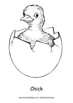 chick colouring page 2