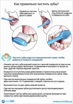 Dental Facts, Dental Hygiene, Biology, Tooth, Infographic, Posters, Personal Care, Makeup, Beauty