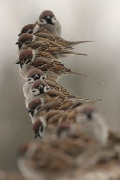 New Wonderful Photos Sparrows