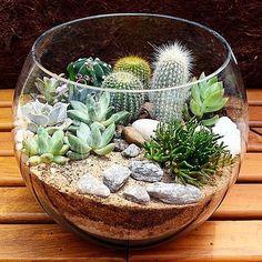Top 14 Mini Glass Bowl Terrarium Pictures And Ideas - Home Improvement wedding Terrarium succulentes Mini Cactus Garden, Succulent Gardening, Cactus Flower, Cacti And Succulents, Planting Succulents, Cactus Plants, Planting Flowers, Flower Beds, Cactus Terrarium