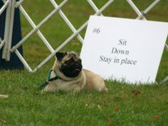 How to Teach a dog to Sit and Stay: Sit Dog At The Park ~ petsrank.com Dogs Inspiration