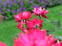 DBU garden
