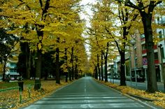 Unedited Fall [Padova, Italia]