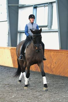 The Importance of Shoulder-in When Training the Dressage Horse