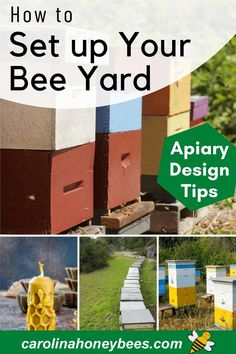 Buzz Bee, Backyard Beekeeping, Healthy Environment, Yard Design, Bee Happy, Flower Farm, Bees Knees, Urban Farming, Make Your Own