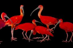 """12000 Endangered Animal Species are Captured by National Geographic Photographer Joel Sartore for his Photography Project """"Photo Ark"""""""