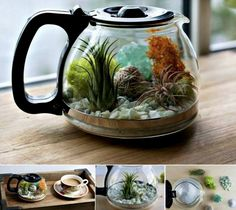 Terrarium Coffee Pot is An Easy DIY You'll Love