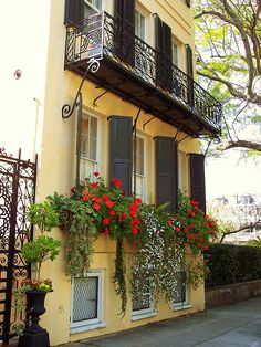 Beautiful overflowing flower boxes in Charleston, SC! See what you can do and how much you can save doing it at GO Charleston Deals! https://gocharlestondeals.com/current-deals/