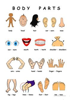 Body Parts - English ESL WorksheetsYou can find Body parts and more on our website.Body Parts - English ESL Worksheets Body Parts Preschool Activities, Preschool Body Theme, English Activities For Kids, Learning English For Kids, English Worksheets For Kids, English Lessons For Kids, Kids English, Learn English, Listening Activities