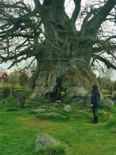 Rumskulla oak, more than 1,000 years old, is in Smaland, Sweden.