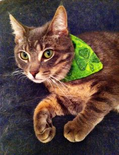 Cat Bandana / Dog Scarf / Pet Clothing / Handmade Pet Accessories / Celtic Four Leaf Clover Scarf / St. Check this out for your pet because everyone is Irish on St. Funny Cat Pictures, Dog Pictures, Cat Scarf, Cat Bandana, Animal Projects, Cat Facts, Cat Treats, Cute Cats, Kittens Cutest