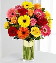 Yellow Daisies, Pink Daisies, Red Daisies, Orange Daisies, San ...