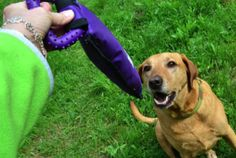 Read our expert tips and essential products for welcoming your new pet. #dog #dogtoys #TuesdayMorning Tug toy $6.99 (compare at $14.99)