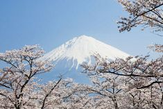 Starting learning for free with a wide range of free online courses covering different subjects. Discover free online learning from top universities and organisations. Japanese Philosophy, Mahayana Buddhism, Western Philosophy, Japan Picture, Top Universities, Mount Fuji, Japanese Culture, Online Courses, Turismo