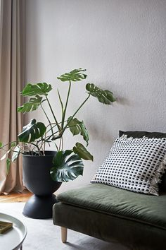Chic boho vibes in the home of @saltyinteriors - she combined soft neutrals with a green velvet sofa and graphic black accents | Seen here: a Bemz cover in Moss Green Simply Velvet and Kastell furniture legs on an IKEA Söderhamn sofa Söderhamn Sofa, Ikea Sofa, Minimalist Scandinavian, Scandinavian Design, Replacement Furniture Legs, Green Velvet Sofa, Green Queen, High Quality Furniture, Decorative Cushions