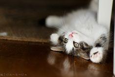 No more cat urine everywhere! - kittens #cats#cat #spraying