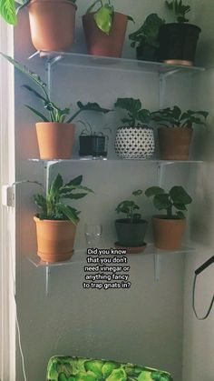 Shade Plants, Air Plants, Potted Plants, Best Indoor Hanging Plants, Household Plants, All About Plants, Inside Garden, Summer Plants, Mother Plant