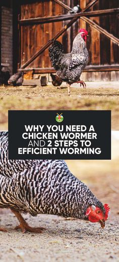 Why You Need a Chicken Wormer and 2 Steps to Efficient Worming